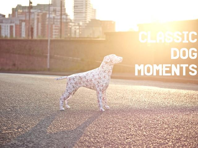 CLASSIC DOG MOMENTS - 1
